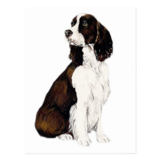 English Springer Spaniel Dog Art Postcard