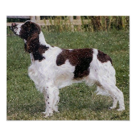 English Springer Spaniel Dog Portrait Poster Print