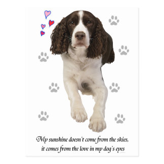 English Springer Spaniel Dog Post Cards