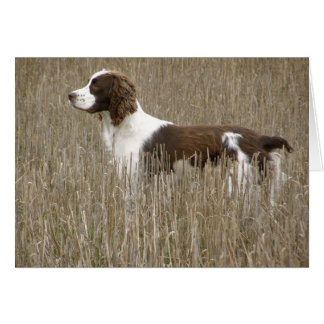 English Springer Spaniel - Greeting Card