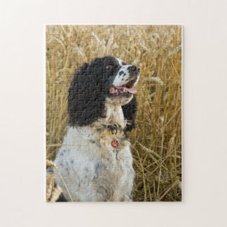 english springer spaniel in wheat.png puzzles