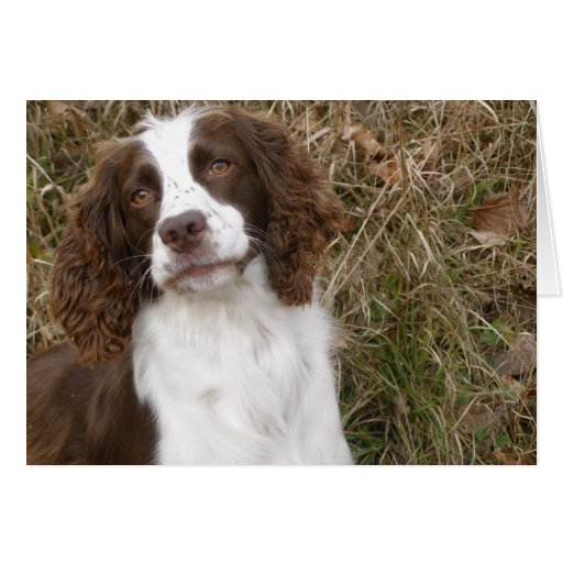 English Springer Spaniel - Man's Best Friend Greeting Cards
