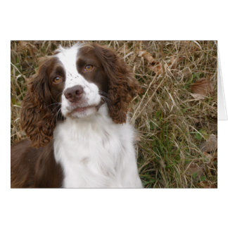 English Springer Spaniel - Man's Best Friend Greeting Card