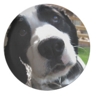 English Springer Spaniel Party Plate