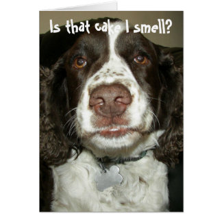 English Springer Spaniel Photo Funny Birthday Card