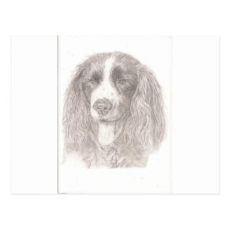 English Springer Spaniel Postcard