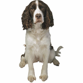 English Springer Spaniel Standing Photo Sculpture