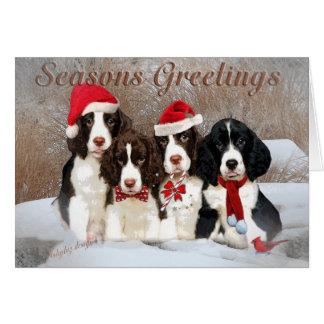 English Springer Spaniels Season Greetings Cards