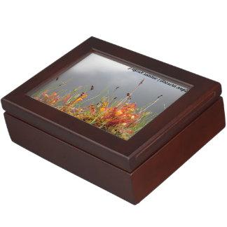 English Sundew Keepsake Box