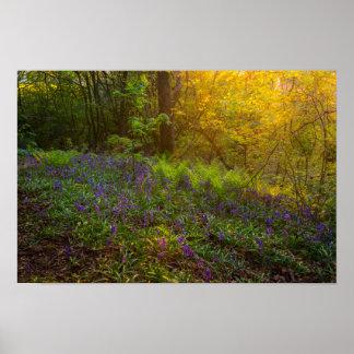English Woodland Poster/Print Poster