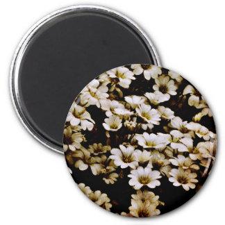 Enhanced Dasies Floral Fridge Magnet