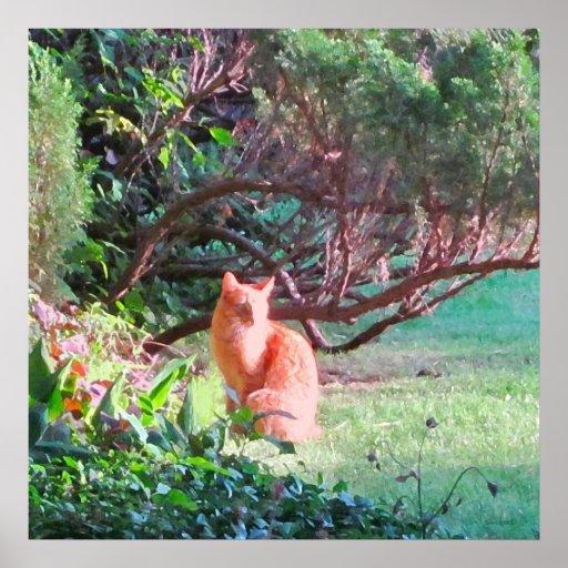 Enigmatic Orange Cat Print