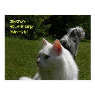 ENJOY SUMMER DAYS! POSTCARDS