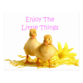 Enjoy The Little Things, Ducklings Postcard
