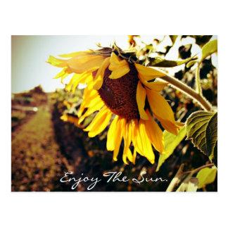 Enjoy The Sun Postcard