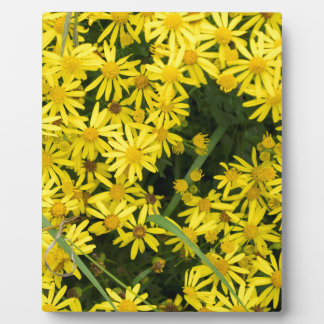 Enlgish yellow daisy photography plaque