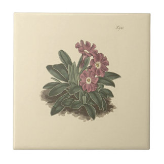 Entire Leaved Primrose Botanical Illustration Tile