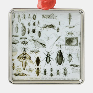 Entomology Insects Christmas Ornament