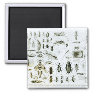 Entomology Insects Magnet