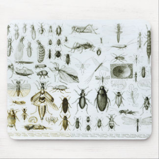 Entomology Insects Mouse Mat