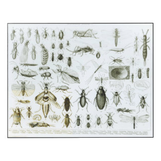 Entomology Insects