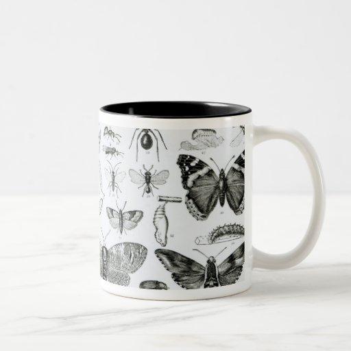 Entomology Mug