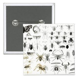Entomology, Myriapoda and Arachnida 15 Cm Square Badge