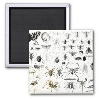 Entomology, Myriapoda and Arachnida Magnet