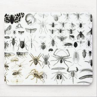 Entomology, Myriapoda and Arachnida Mouse Mat