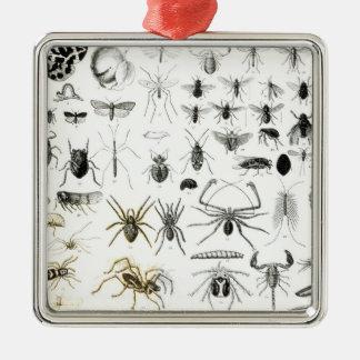 Entomology, Myriapoda and Arachnida Silver-Colored Square Decoration
