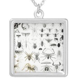 Entomology, Myriapoda and Arachnida Silver Plated Necklace