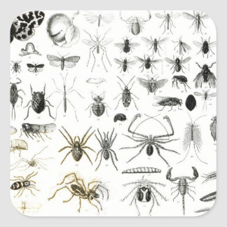 Entomology, Myriapoda and Arachnida Square Sticker
