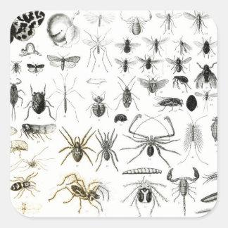 Entomology, Myriapoda and Arachnida Square Sticker