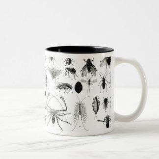 Entomology, Myriapoda and Arachnida Two-Tone Mug