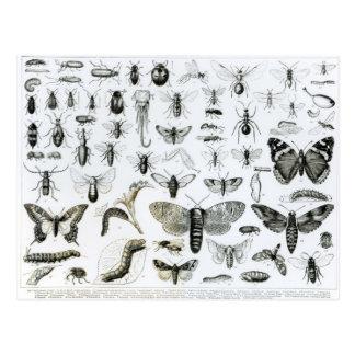 Entomology Post Card