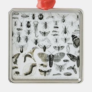 Entomology Silver-Colored Square Decoration