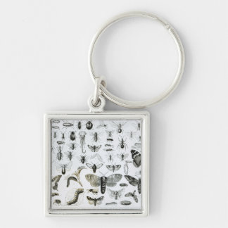 Entomology Silver-Colored Square Key Ring