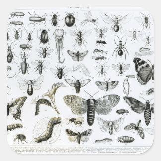 Entomology Square Sticker