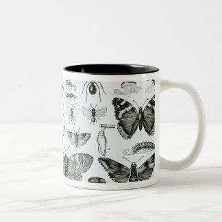 Entomology Two-Tone Coffee Mug
