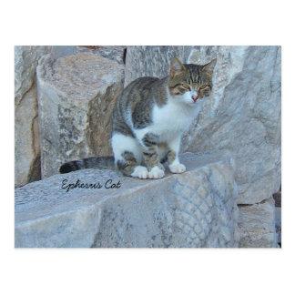 Ephesus Feral Cat Postcard