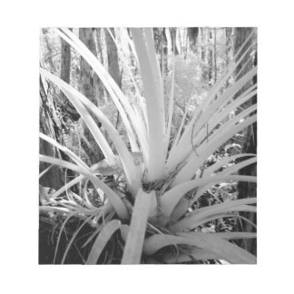 Epiphytic tillandsia are common in the Florida, Notepad