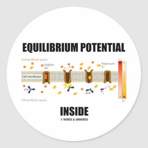 Equilibrium Potential Inside (Active Transport) Round Stickers