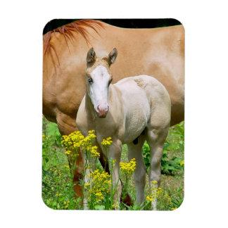 Equine Art Premium Magnet Flexible Magnet