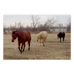 Equine Follow the Leader Poster