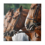 Equine Horse Show Tile