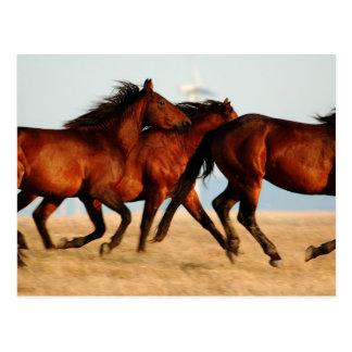 equinus - wild horses post cards