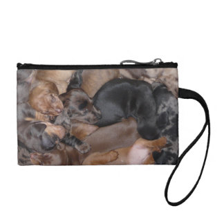Eridox dachshund puppies clutch