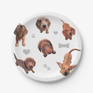Eridox red chocolate dachshund dapple puppies 7 inch paper plate