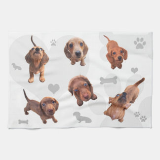 Eridox red chocolate dachshund dapple puppies tea towel