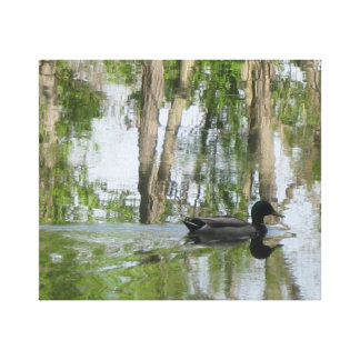 Erie Canal Duck On Canvas Stretched Canvas Print